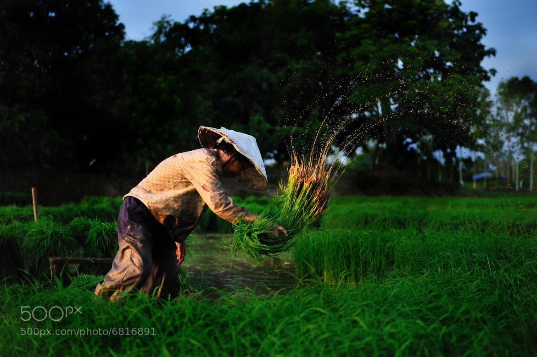Photograph Farmer in thailand by thanagon karaket on 500px