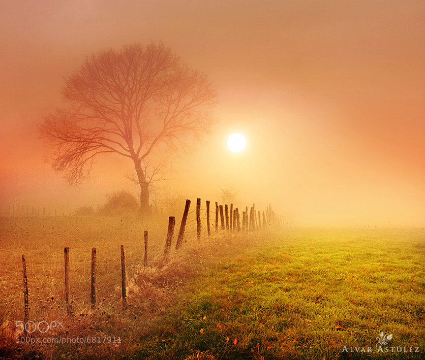 Photograph Golden fog by Alvar Astúlez on 500px