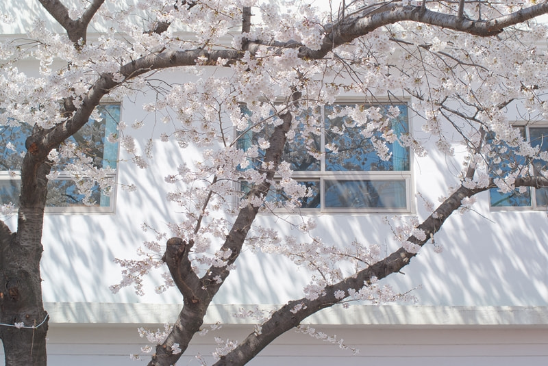 Photograph Spring by Jeong Min kyu on 500px