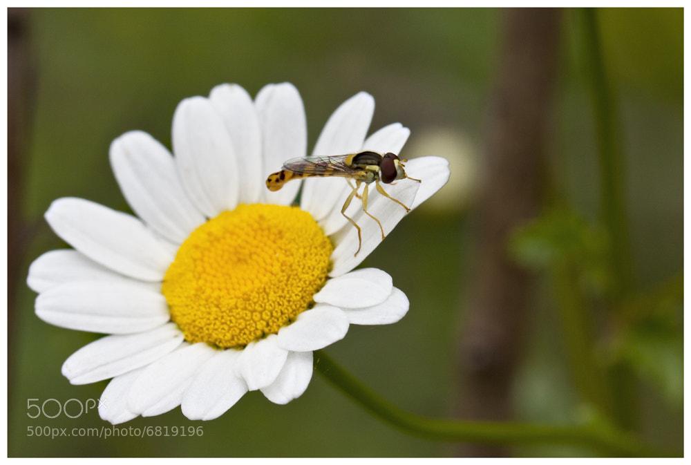 Photograph Spring by Xavi Arqués on 500px