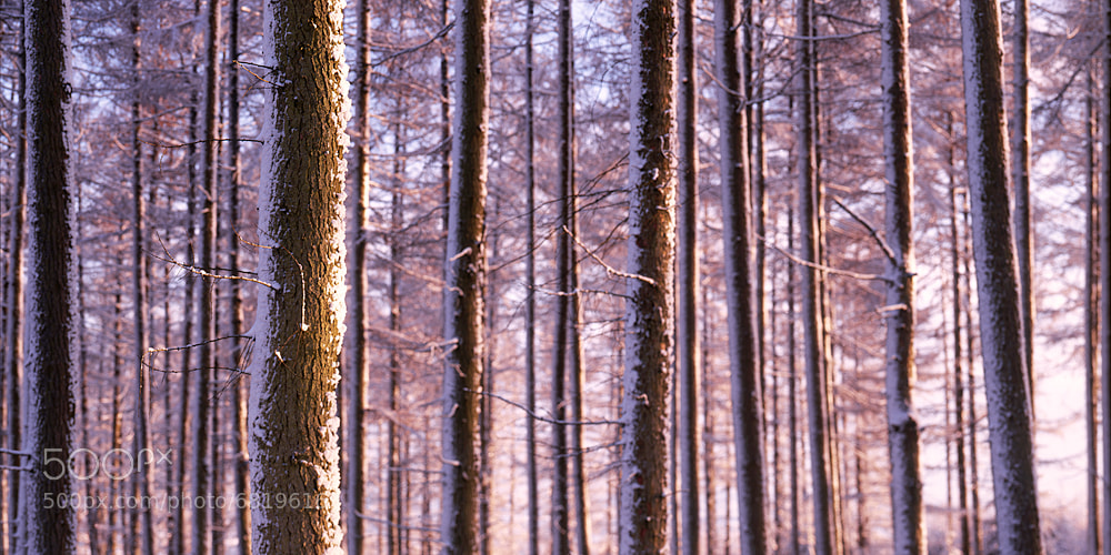 Photograph Winter, Mortimers Forest by Edward Fury on 500px