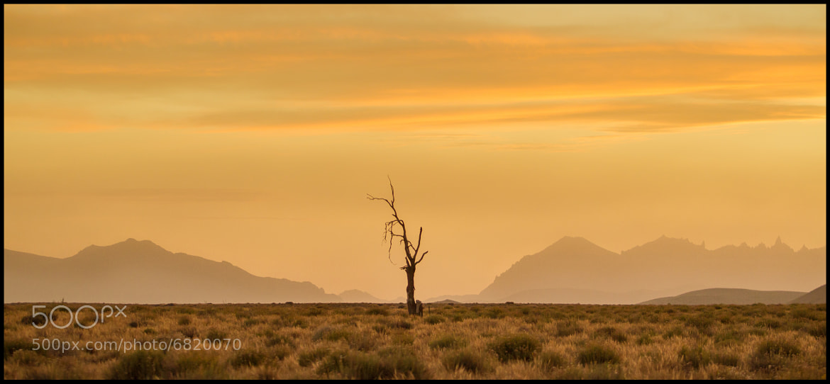 Photograph Die in solitude by Federico R. Grosso on 500px
