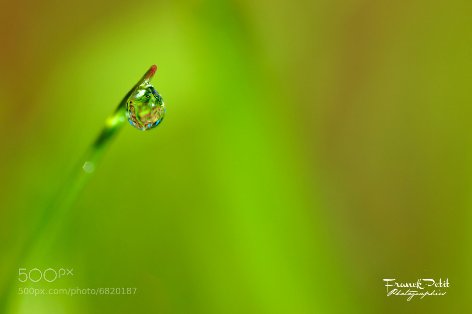 "Photograph ""The"" Droplet  by Franck PETIT on 500px"