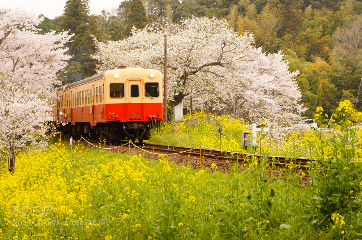 Photograph local train by shuso itaoka on 500px
