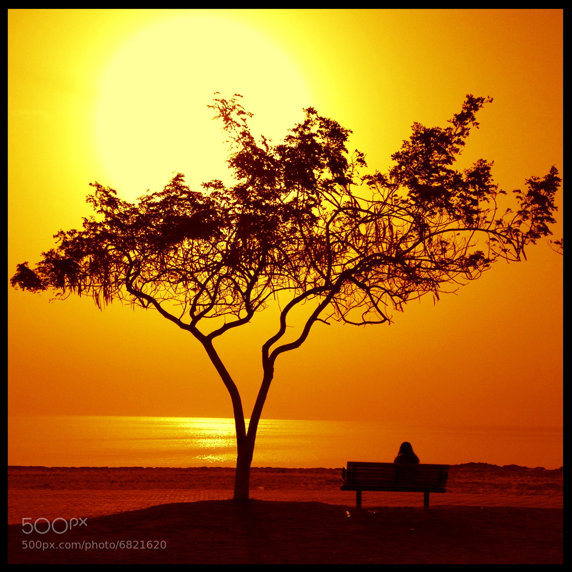 Photograph Sunny Silhouette  by Altaf AlAli on 500px