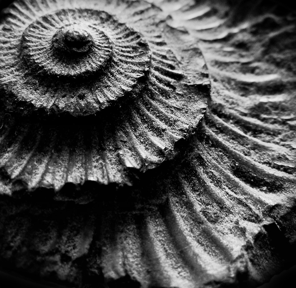 Photograph Fossil Detail by Scott Fisher on 500px
