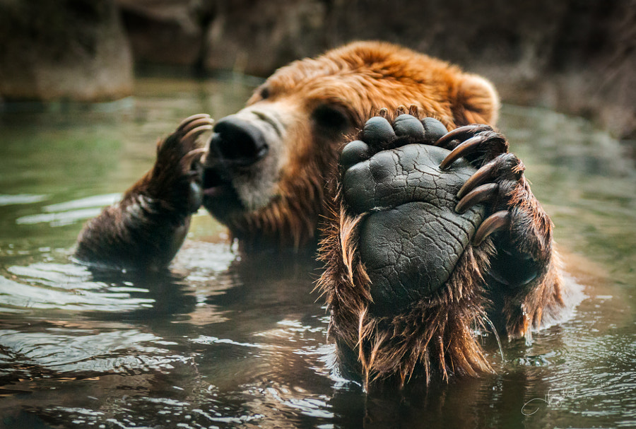 Photograph Talk to the Paw by Holly Kuchera on 500px