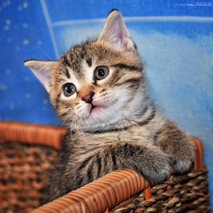 Photograph Little furry ball by Zoran Milutinovic on 500px