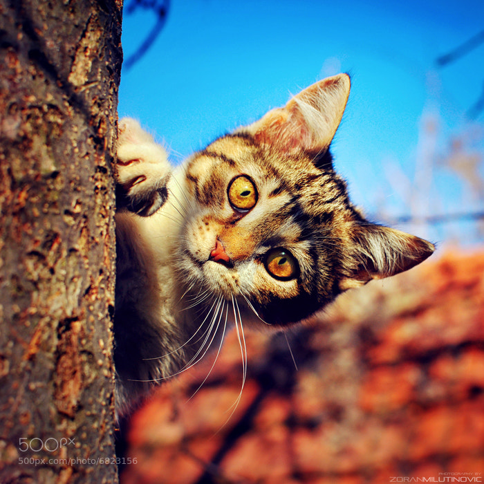 Photograph Hide and Seek by Zoran Milutinovic on 500px