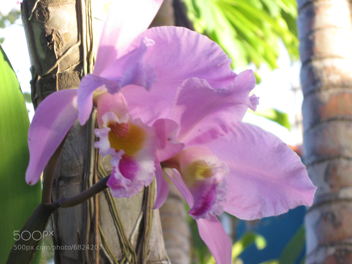 Photograph Orchid at Moms Garden by Antony Götzschel on 500px