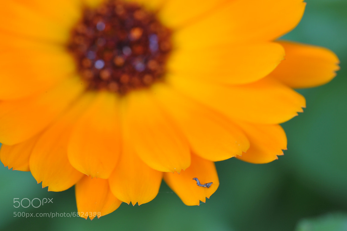 Photograph Flower Yellow by Mark  on 500px