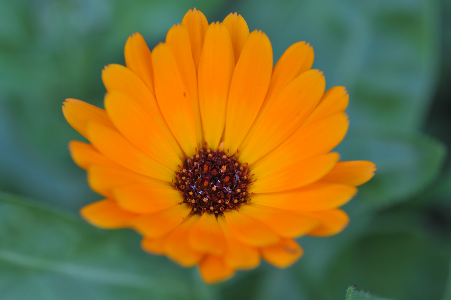 Photograph Yellow Flower by Mark  on 500px