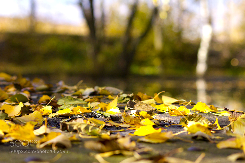 Photograph Fallen Leaf by Thomas Zagler on 500px
