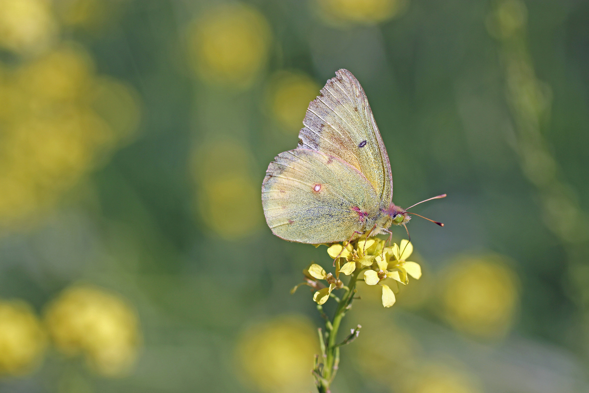 Photograph Hello Butterfly by Jane Sleeth on 500px