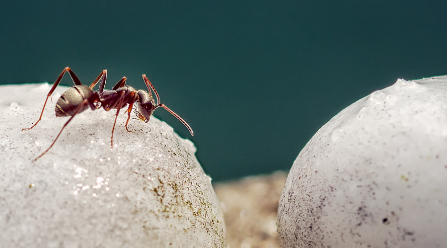 "A little ant exploring the ""world"""
