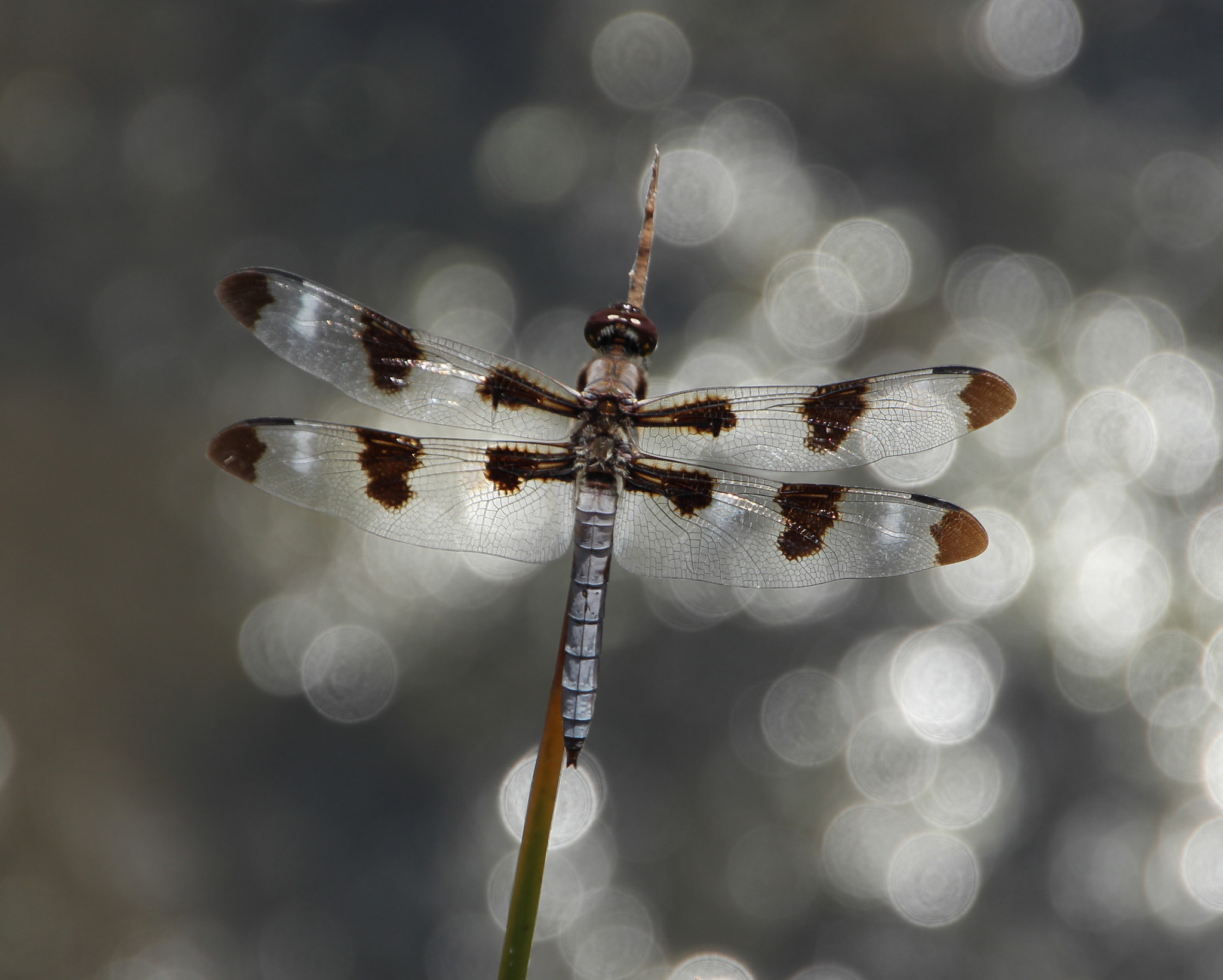 Photograph Dragonfly dreaming by Meredith Mahoney on 500px