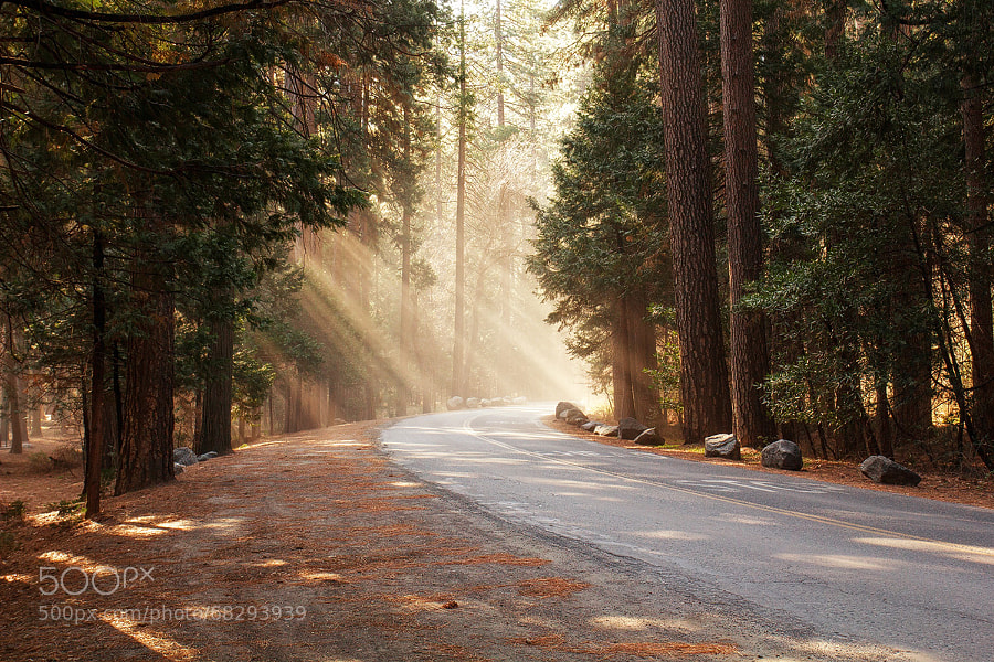 Photograph Blessed Street | Yosemite NP, California, USA by Matthias Huber on 500px