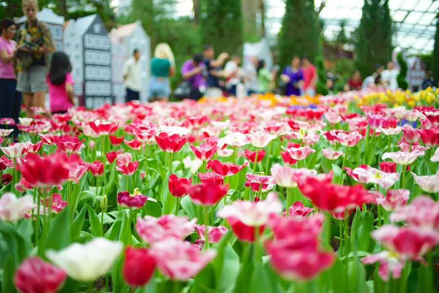 TulipMania at Gardens By The Bay!