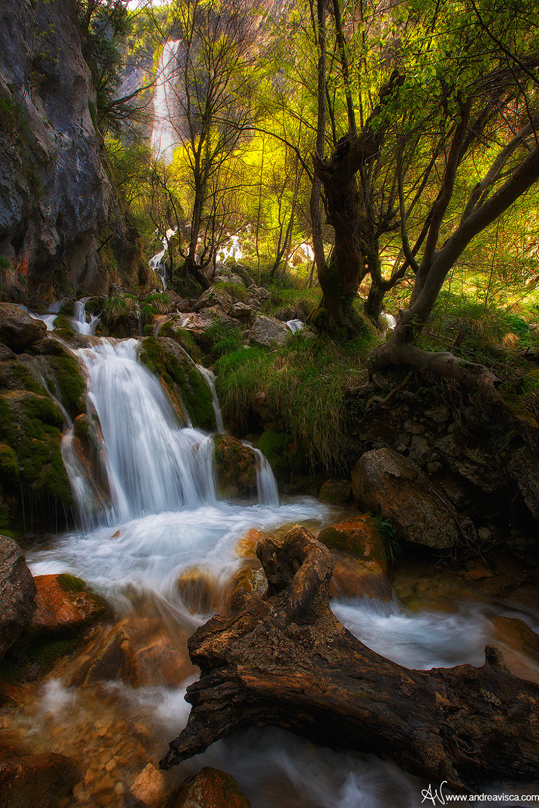 Photograph Enchanted forest by Andrea Visca on 500px