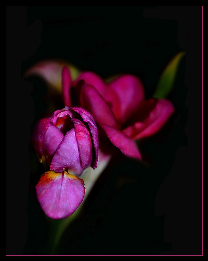 Photograph For petal... by Ирина Никитина on 500px