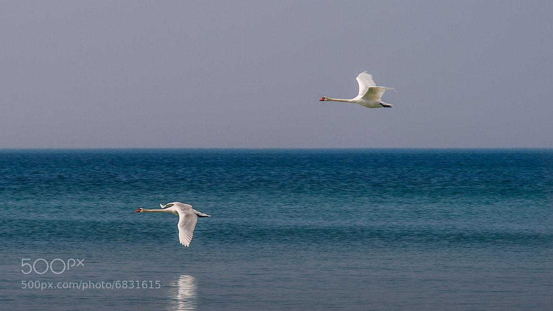 "Photograph ""Flight patrol"" by We Sch on 500px"