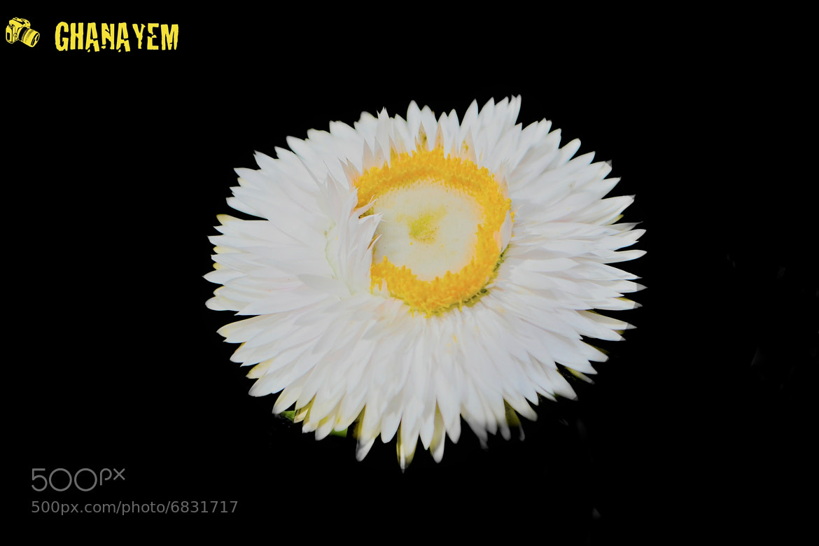 Photograph Egg Flower  by jamil ghanayem on 500px