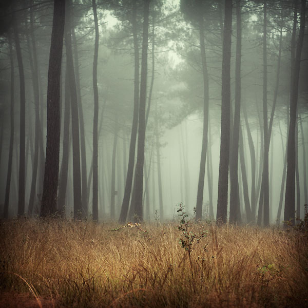 Photograph Forest by Julie Rey on 500px