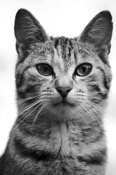 Photograph The Cat by Michael Hansmann on 500px