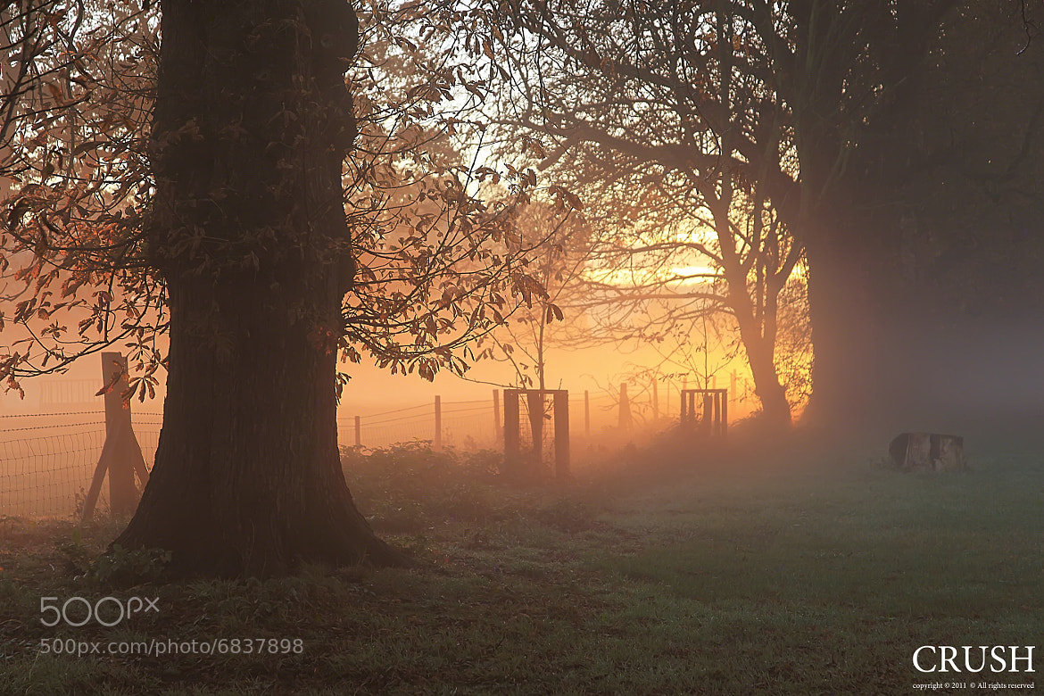 Photograph Morning is Waking by Martin  Crush on 500px