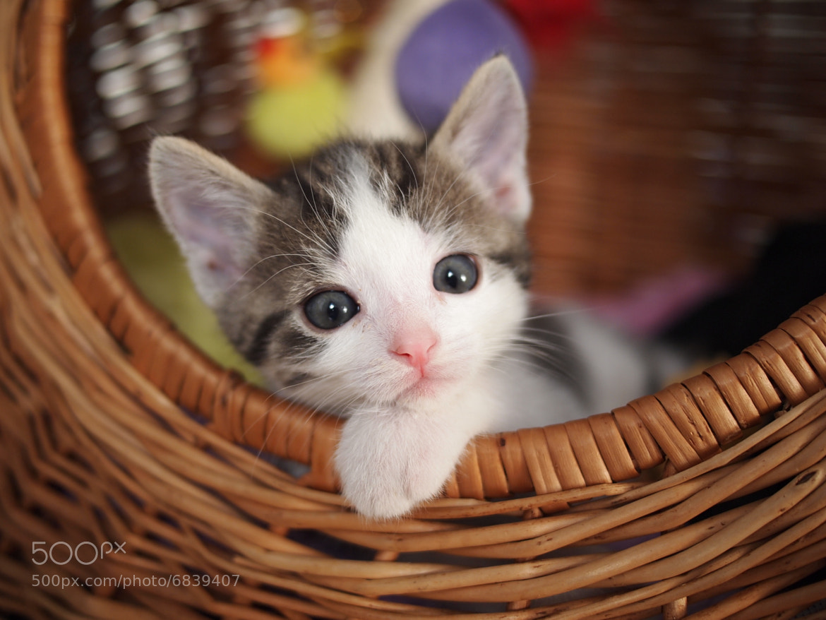 Photograph A cute kitty by Patrick Größ on 500px