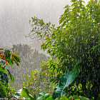 Постер, плакат: Tropical Rain in Dominica