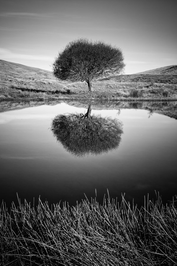 Solitary Reflection by Brad Grove on 500px.com