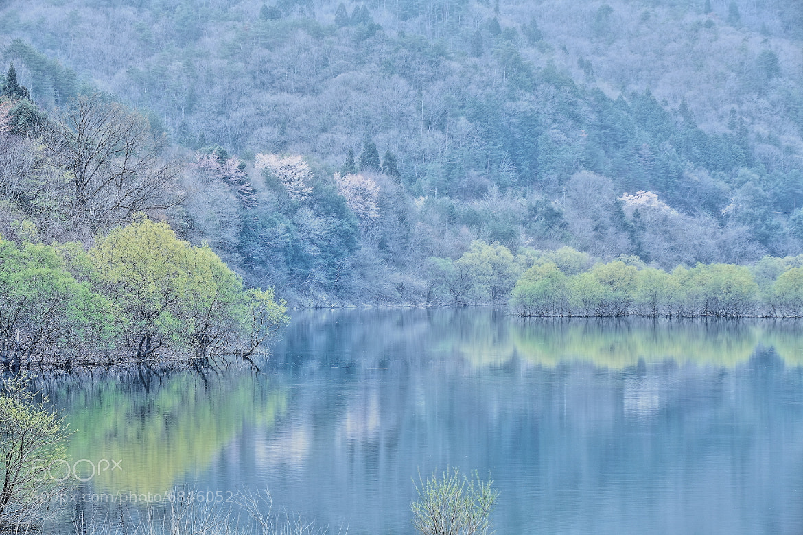 Photograph Time of fresh green by makoto isa on 500px