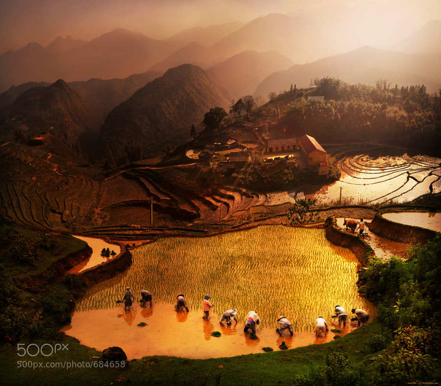 Photograph ploughing season by Weerapong Chaipuck on 500px