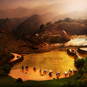 ploughing season by Weerapong Chaipuck (Weera)) on 500px.com