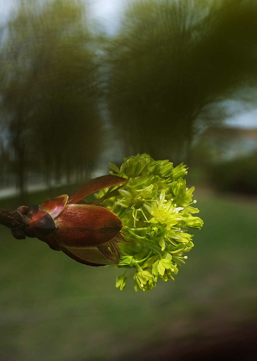 Photograph Spring wind... by chinh n on 500px