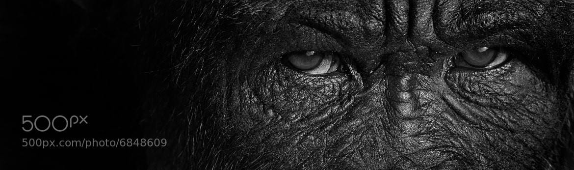 Photograph Eyes by Patrick Latter on 500px