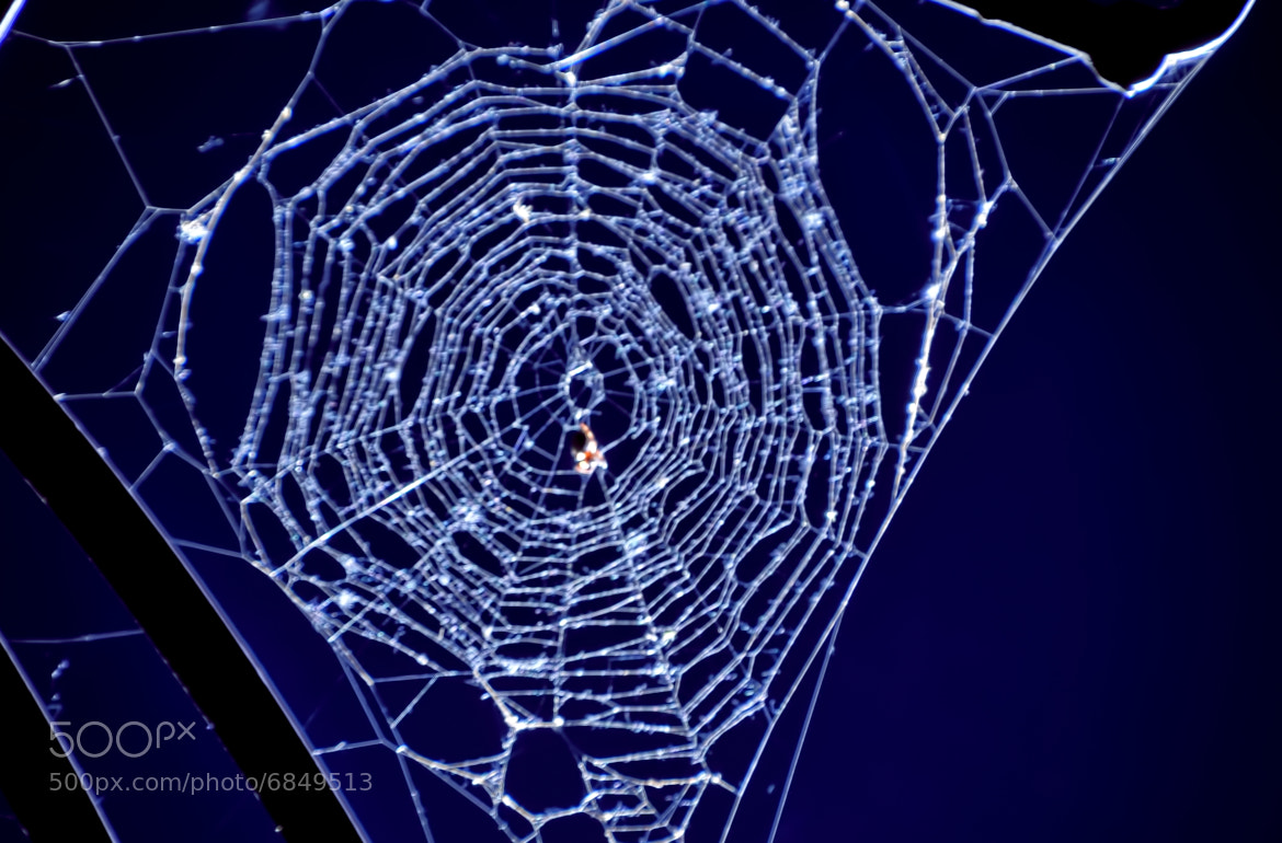 Photograph Illuminated Spider Web at Night  by Ronnie Wiggin on 500px