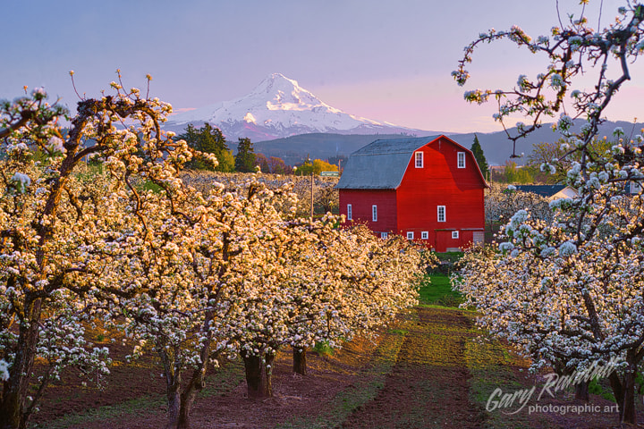Photograph Hood River Valley Blossoms by Gary Randall on 500px
