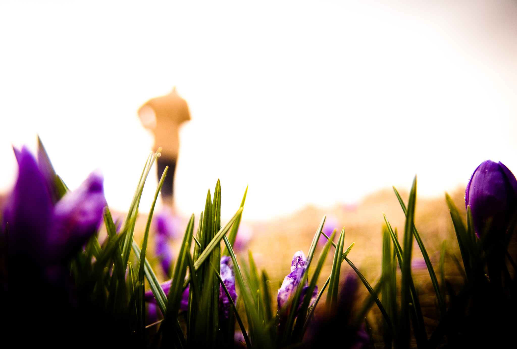 Photograph purple sunny day by Lirca Lucian on 500px