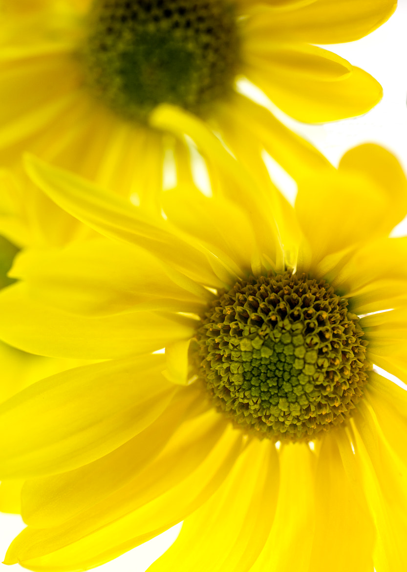 Photograph Yellow, Bright Yellow by Brad Rickerby on 500px