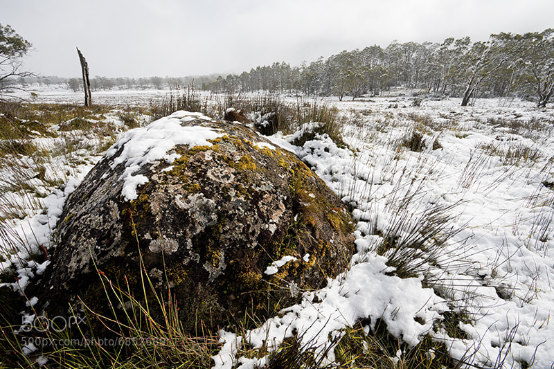 Photograph Snowy buttongrass plains by Michael Gay on 500px