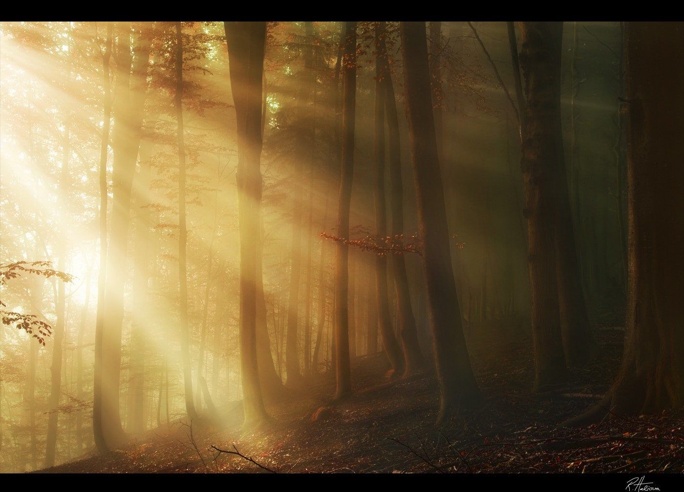 Photograph Fairy tale Forest by Robin Halioua on 500px