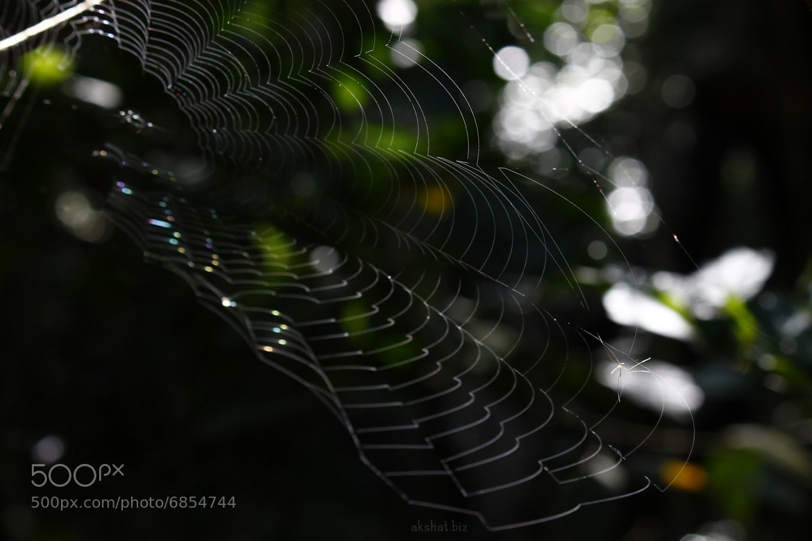 Photograph Spider web by akshat dwivedi on 500px