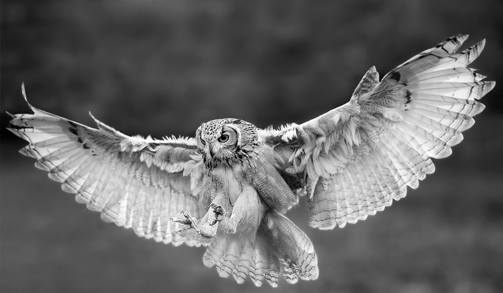 Photograph test of black and white by Stefano Ronchi on 500px