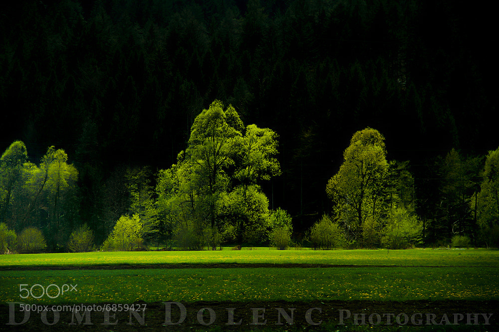 Photograph field of Nature by Domen  Dolenc on 500px