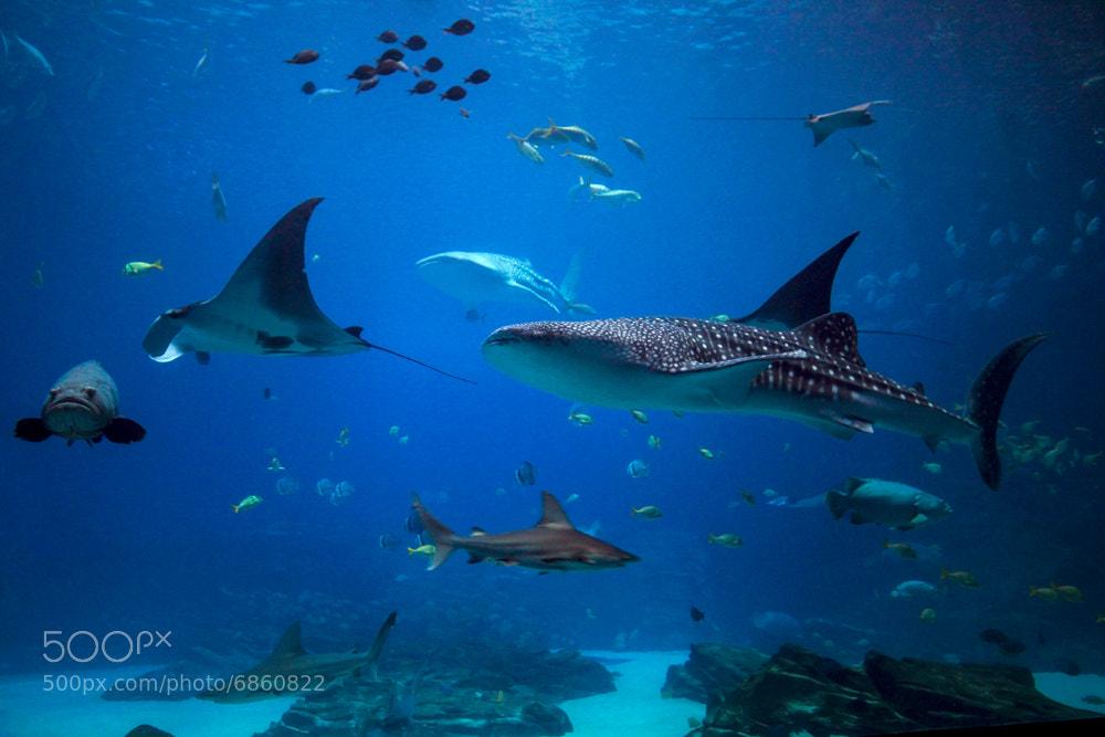 Photograph georgia aquarium by Dara Pilyugina on 500px