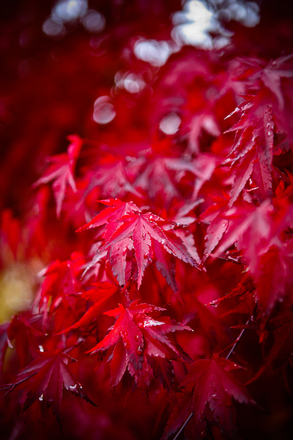 Photograph Red Rain by Philipp Wedel on 500px
