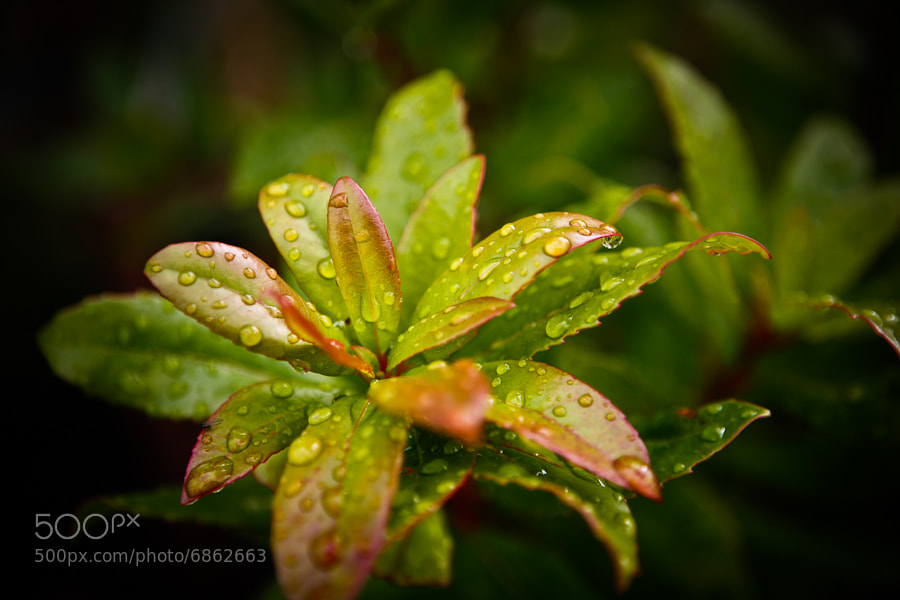 Photograph After the Rain by Philipp Wedel on 500px