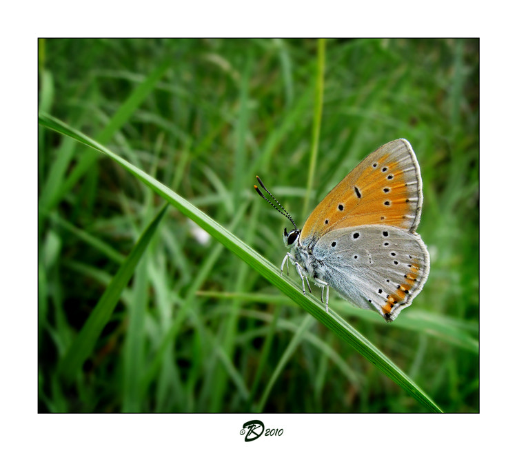 Photograph Butterflies album: 4 by no_gravity * on 500px